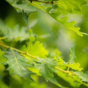 Bild von grünen Blättern